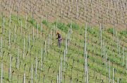 b_180_160_16777215_00_images_operaio_agricolo_in_vigna.jpg